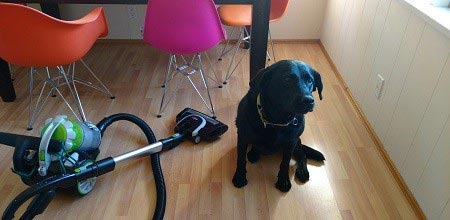 Pet friendly house cleaning